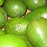 Avocados_1