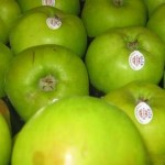 Bramley Apples_1