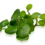 Watercress_1