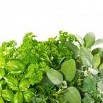 herbs_fresh_1