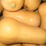 butternut-squash_1